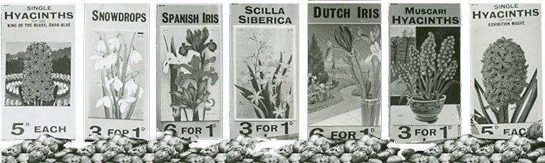 Some of the price tickets for flowering bulbs from Woolworths' windows in 1939